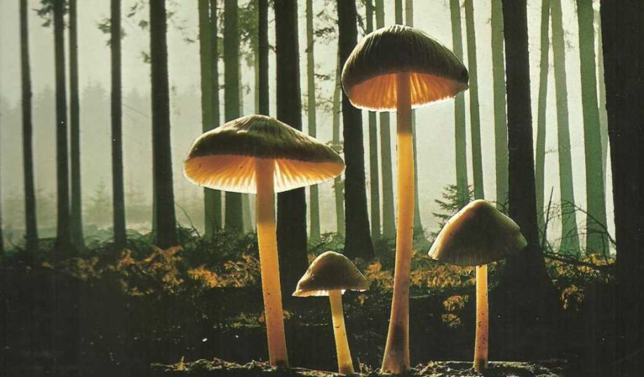 libro per riconoscere funghi